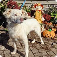 Adopt A Pet :: Nicola - West Chicago, IL