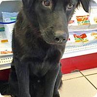 Adopt A Pet :: Uzo - BIRMINGHAM, AL