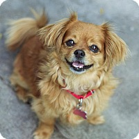 Adopt A Pet :: Chance - Los Angeles, CA