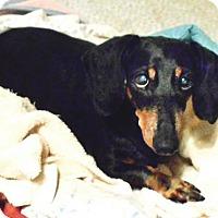 Adopt A Pet :: Salsa Verde - San Antonio, TX