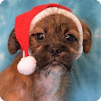 Adopt A Pet :: Bear - Eureka, CA