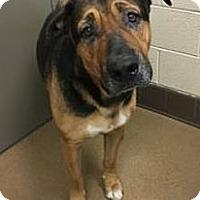 Adopt A Pet :: Max - Beverly Hills, CA