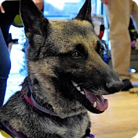 Adopt A Pet :: Matcha - Kansas City, MO