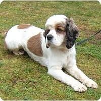 Adopt A Pet :: BONNIE - Tacoma, WA