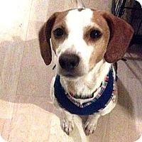 Adopt A Pet :: Clint - Novi, MI