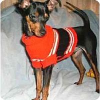 Adopt A Pet :: Hans - Mooy, AL