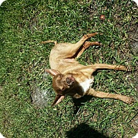 Adopt A Pet :: Ken - S. Pasedena, FL