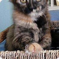 Adopt A Pet :: Emma - Florence, KY