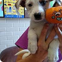 Adopt A Pet :: Talullah - Charlemont, MA