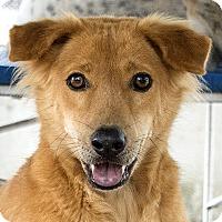 Adopt A Pet :: Jake - Long Beach, NY