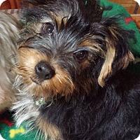 Adopt A Pet :: Tucker AD 03-26-16 - Preston, CT