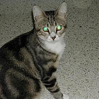 Adopt A Pet :: Curtis - Bonita Springs, FL
