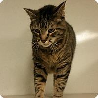 Adopt A Pet :: Tig - Indianola, IA