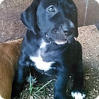 Adopt A Pet :: Emma - Waller, TX