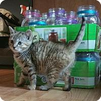 Adopt A Pet :: Barbara - Woodbine, NJ