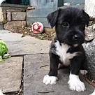 Adopt A Pet :: Baby Eliza (Adoption Pending)