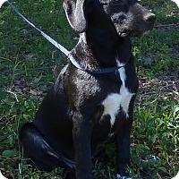 Adopt A Pet :: Marty - Hartford, CT
