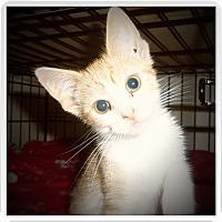 Adopt A Pet :: FERRIS - Medford, WI