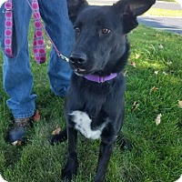 Adopt A Pet :: Big Riley - IN TRAINING - Coldwater, MI