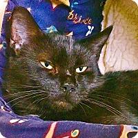 Adopt A Pet :: Shirley - Salisbury, MA