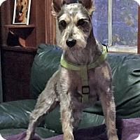 Adopt A Pet :: Bandit - Sudbury, MA