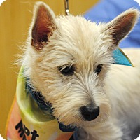 Adopt A Pet :: Mike-pending adoption - Omaha, NE