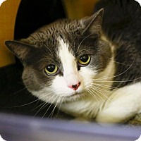 Adopt A Pet :: The Sparkling Diamond - Kettering, OH
