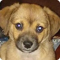 Adopt A Pet :: Buster - Staunton, VA