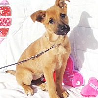 Adopt A Pet :: Nadia - West Chicago, IL