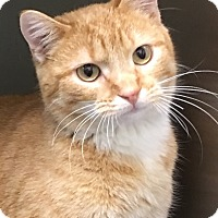 Adopt A Pet :: Valley - Buhl, ID