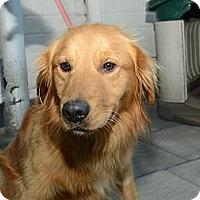 Adopt A Pet :: Roy - New York, NY