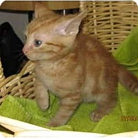 Adopt A Pet :: Marshall - Catasauqua, PA