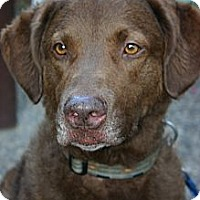 Adopt A Pet :: Ursa - Minnetonka, MN