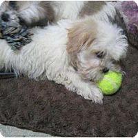 Adopt A Pet :: Stevie - Antioch, IL