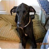 Adopt A Pet :: Gabriel/Gabe 5/2013 - Phoenix, AZ