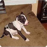 Adopt A Pet :: Oscar - Reisterstown, MD