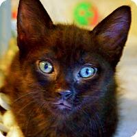 Adopt A Pet :: Jet - Victor, NY