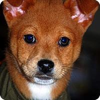 Adopt A Pet :: Rufus - Austin, TX