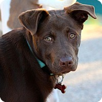 Adopt A Pet :: Truffles - Austin, TX