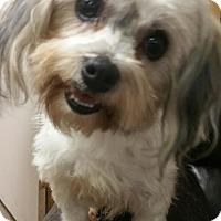 Adopt A Pet :: Pandora - Clarksville, TN