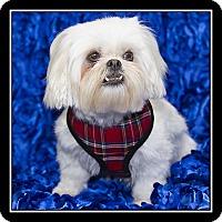 Adopt A Pet :: Delilah - San Diego, CA