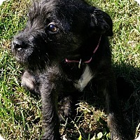 Adopt A Pet :: Duke - Fairview Heights, IL