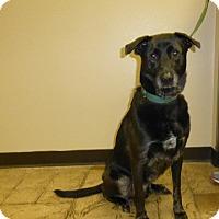 Adopt A Pet :: Hershel - Oviedo, FL