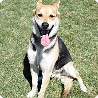 Adopt A Pet :: Franco - Palm Springs, CA