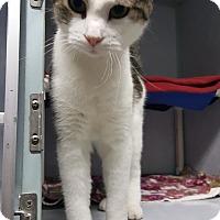 Adopt A Pet :: Magnolia - Cody, WY