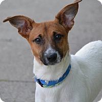 Adopt A Pet :: Gizmo - Lafayette, IN