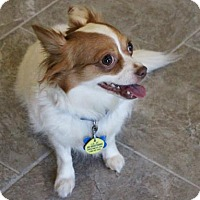 Adopt A Pet :: Millie - West Des Moines, IA