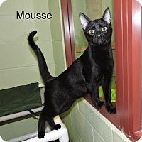 Adopt A Pet :: Mousse - Slidell, LA