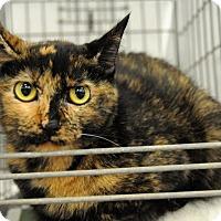 Adopt A Pet :: Mika - Houston, TX
