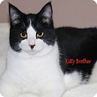 Adopt A Pet :: Kitty Brother - Idaho Falls, ID